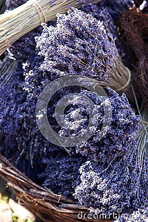 Free Lavender Stock Photos - 1645323