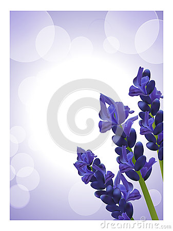 Lavender background 2