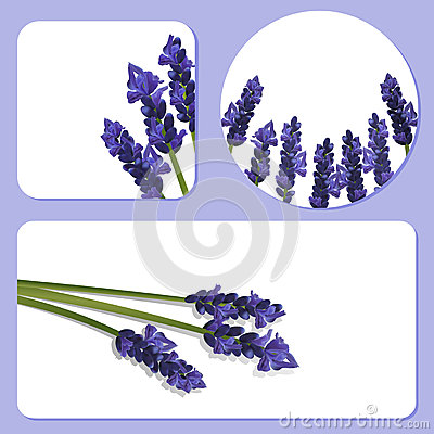 Lavender background templates