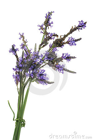 Free Lavender Bundle Stock Photography - 458892