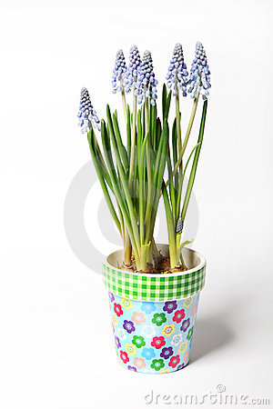 Lavender colored pot