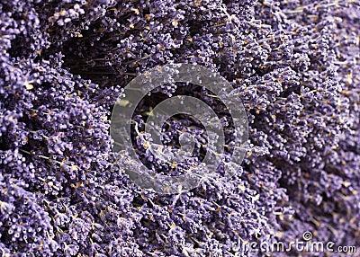 Lavender on Display