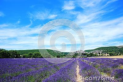 Lavender field at Banon, France