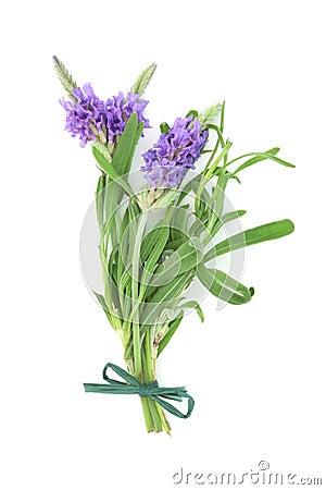 Lavender Herb Flower Posy