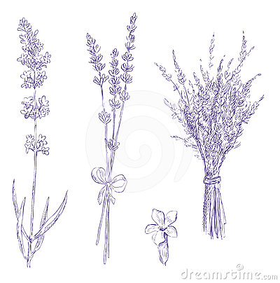 Free Lavender Pencil Drawing Set Royalty Free Stock Photography - 24603877