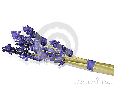 Lavender posey