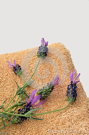 Lavender Preparation