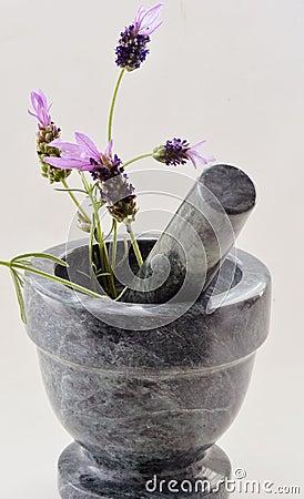 Lavender Preparation