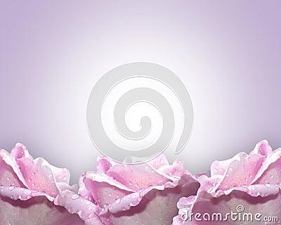 Lavender Roses border