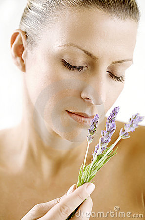 Free Lavender Scent Royalty Free Stock Photos - 4133178