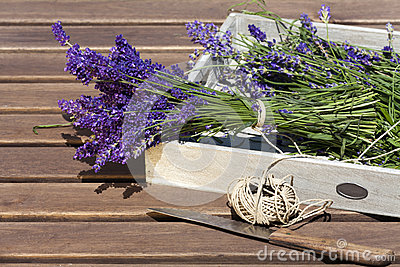 Lavender tied with string