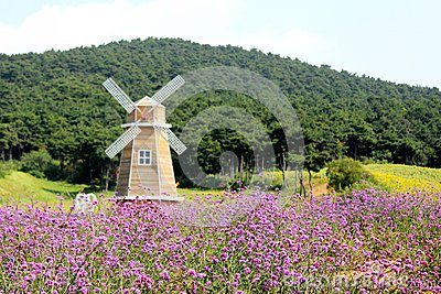 Lavender and windmill