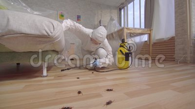 Lavoratore di controllo dei parassiti con lo spruzzatore che sta a casa e sotto lo strato stock footage