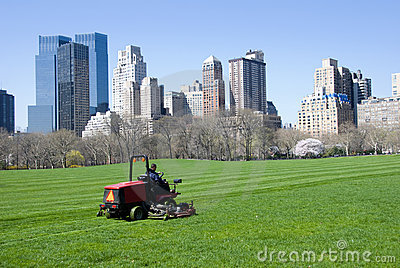 Lawn in Central Park
