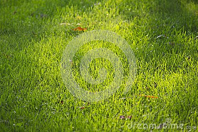 Lawn Stock Photo - Image: 15232700