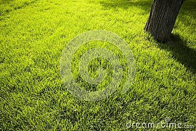 Lawn in a botanical garden