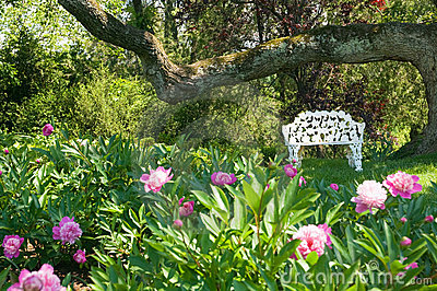 Lawn chair near flower bed