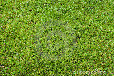 Lawn Grass Royalty Free Stock Photos - Image: 12326658