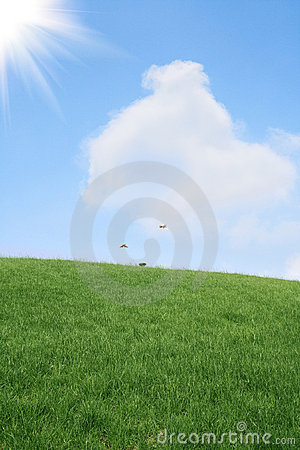 Lawn and sky