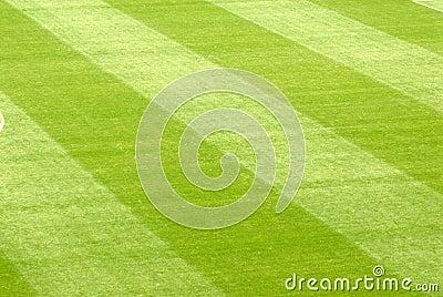 Lawn in a stadium