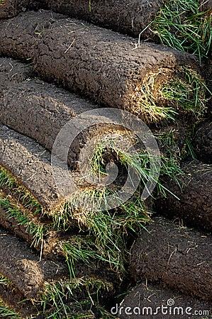 Lawn Turf Rolls