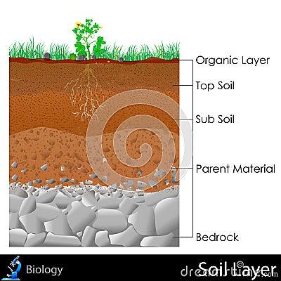 Free Layer Of Soil Stock Photos - 31606153