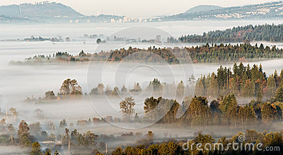 Layers of Trees Breaking Through Misty Scene