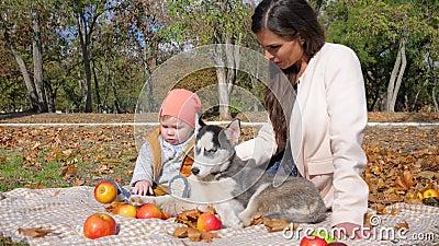 Lazer, família com o cão que aprecia um dia do outono que senta-se na manta com fruto em árvores e em natureza do fundo video estoque