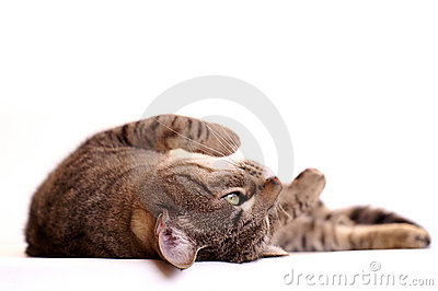 Lazy cat daydreaming