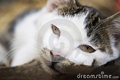 lazy cat gazing