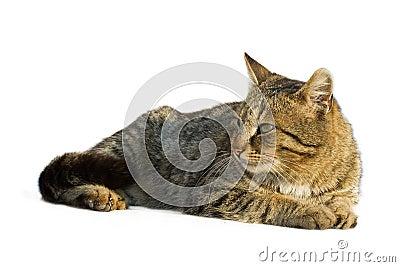 Lazy cat resting