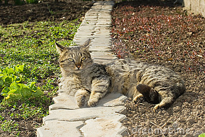 Lazy cat resting in the garden