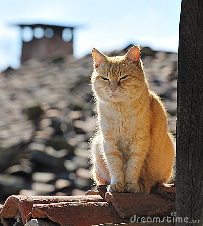 Lazy cat on roof