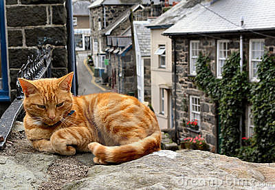 The Lazy Ginger Cat
