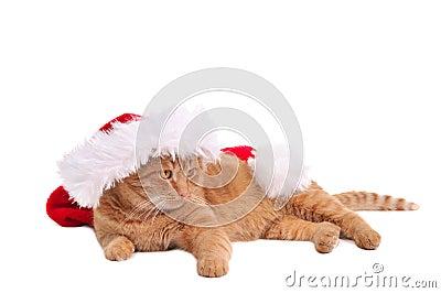 Lazy Santa Cat