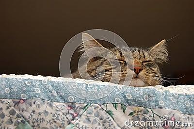 Lazy sleepy cat