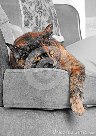 Free Lazy Sunday Afternoon Cat On Sofa Chair Stock Photo - 132276940