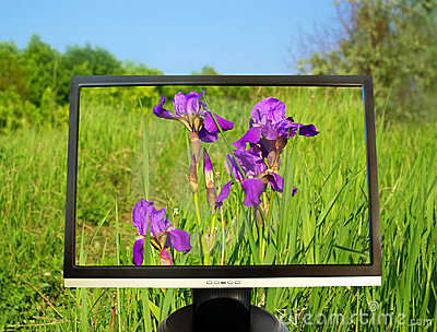 Lcd monitor on summer background