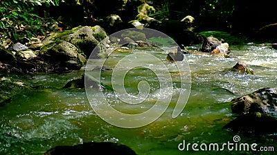 Le anatre nuotano e alimentano nella corrente forestale, in condizioni di luce variabile video d archivio