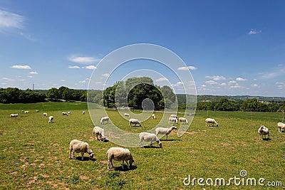 Ciel bleu et herbe de nuages blanche