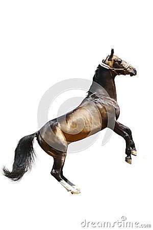Le cheval a isolé