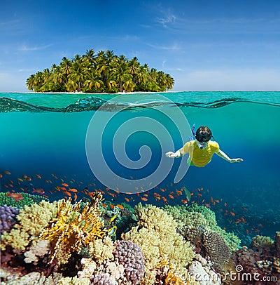 Île de coraux, de plongeur et de paume