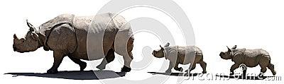 Le famille de rhinocéros a isolé