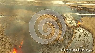 Le feu de végétation dans le delta de Danube banque de vidéos