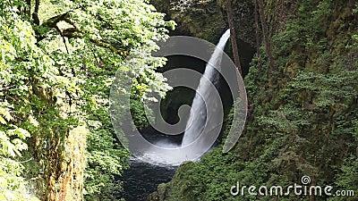 Le film de Metlako tombe sur Eagle Creek en gorge du fleuve Columbia en Hood River County, Orégon Etats-Unis 1080p clips vidéos