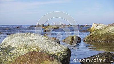 Le grandi pietre del movimento lento in acqua calma sull'orizzonte gulls e spedisce video d archivio