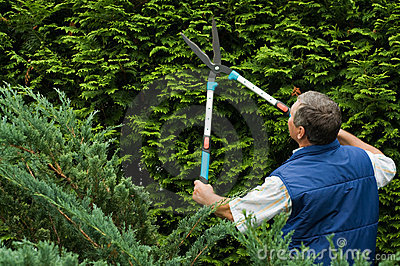 Le jardinier d homme a n a coup une haie for Le jardinier