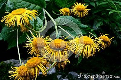 Le jaune fleurit le bouquet