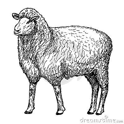 Le mouton remet le dessin illustration de vecteur image - Image mouton dessin ...