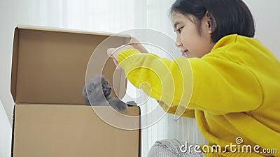 Le mouvement lent de la petite fille asiatique jouant à cache et à chercher avec la race chatte Scottish Fold dans la boîte à pap banque de vidéos